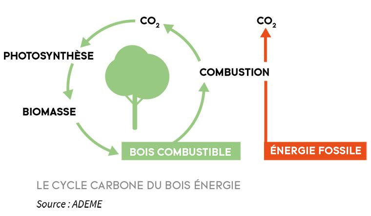 le bois une énergie écologique